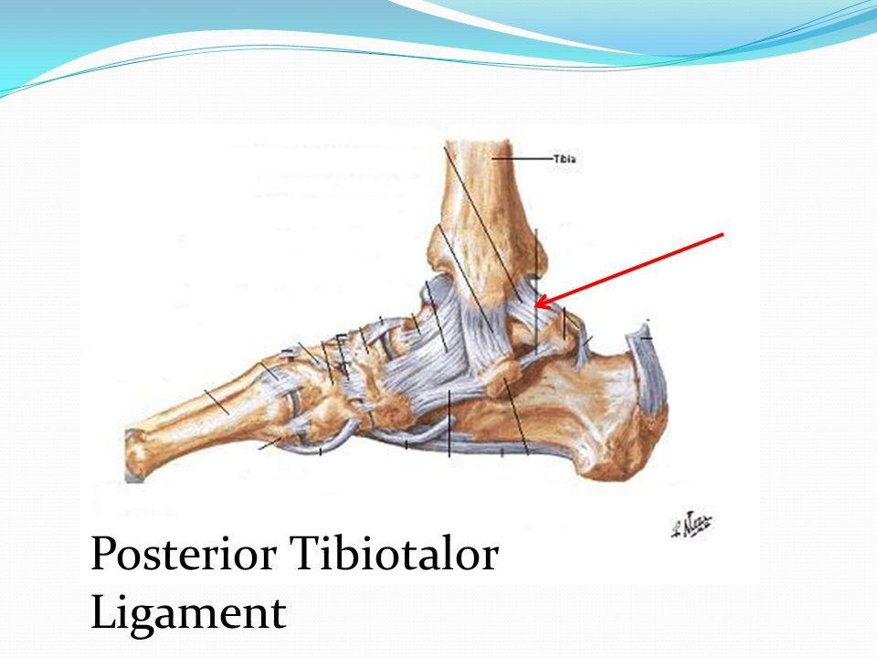 Posterior Tibiotalor Ligament