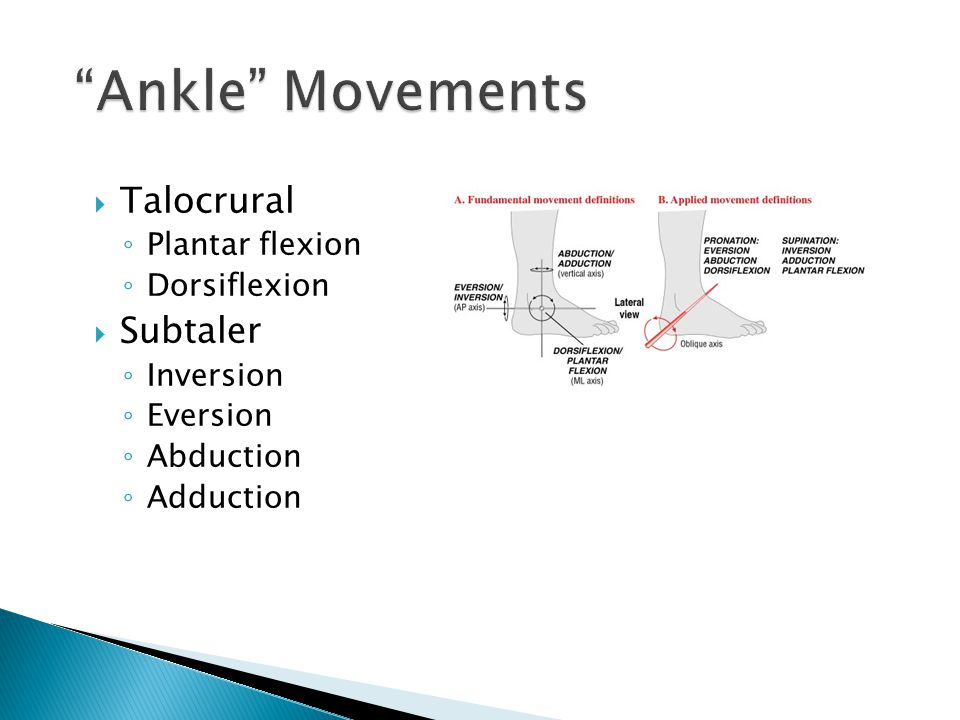 Ankle Movements Talocrural Subtaler Plantar flexion Dorsiflexion