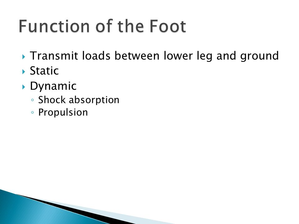 Function of the Foot Transmit loads between lower leg and ground