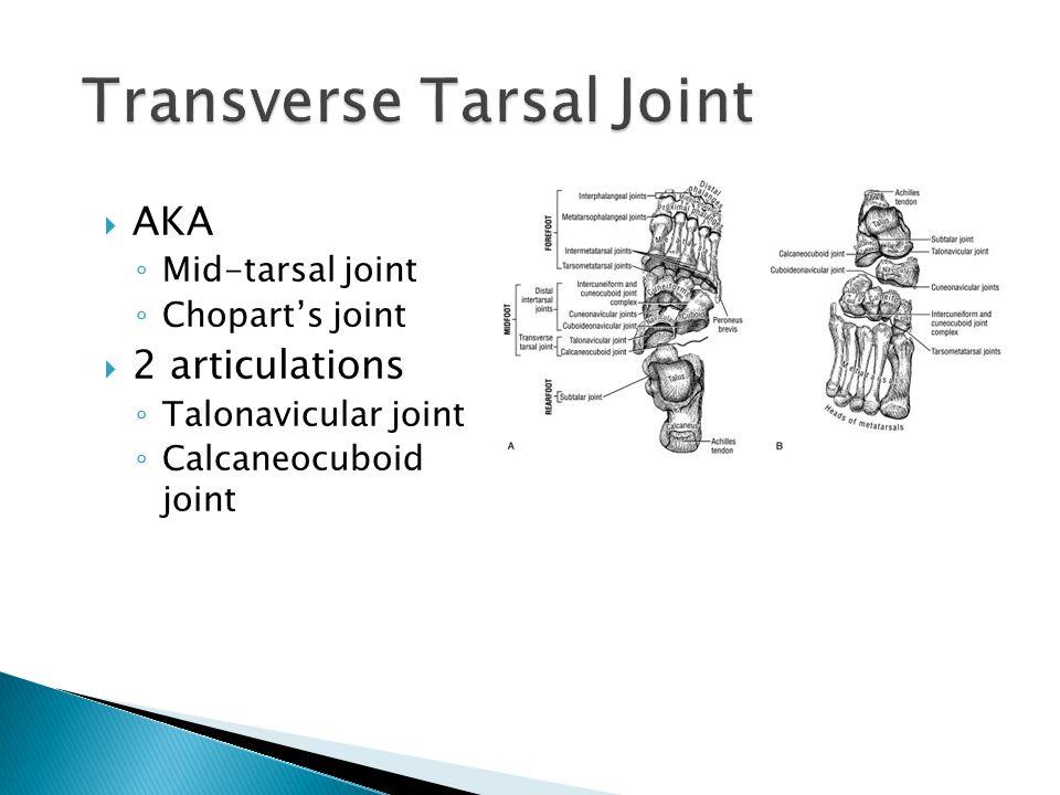 Transverse Tarsal Joint