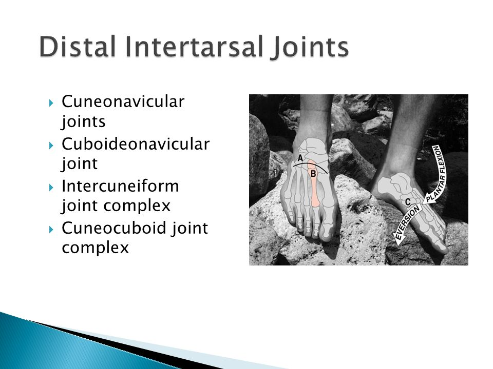 Distal Intertarsal Joints