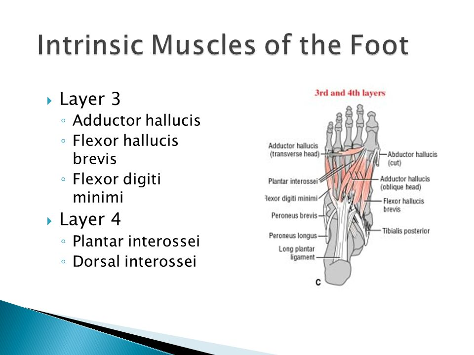 Intrinsic Muscles of the Foot