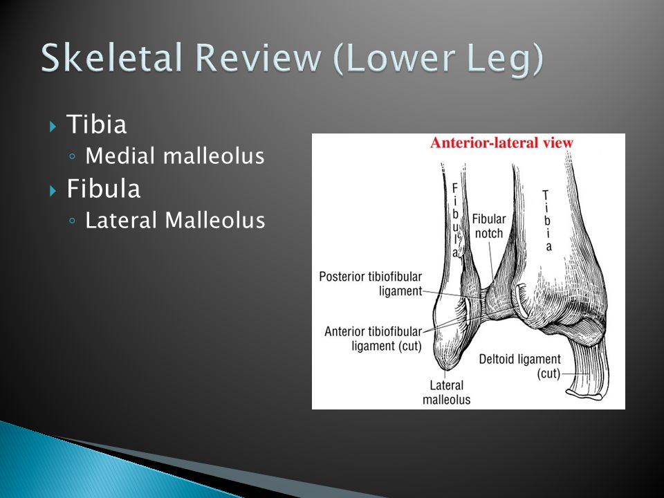 Skeletal Review (Lower Leg)