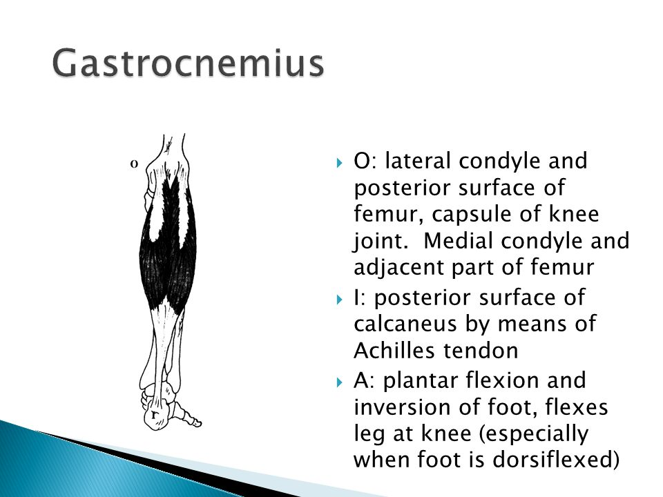 Gastrocnemius O: lateral condyle and posterior surface of femur, capsule of knee joint. Medial condyle and adjacent part of femur.