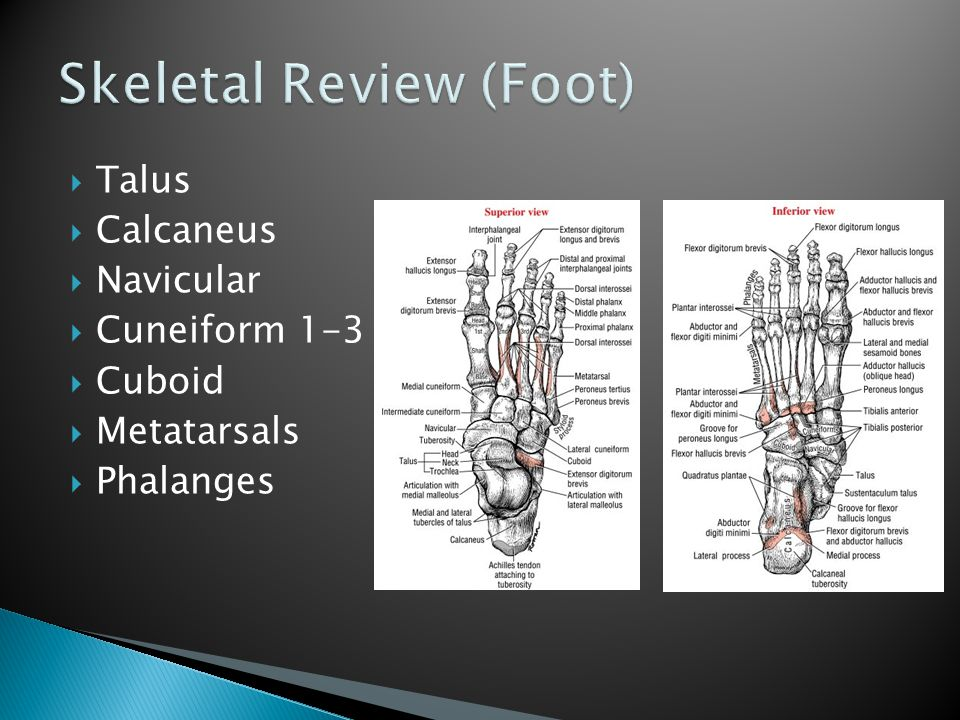 Skeletal Review (Foot)