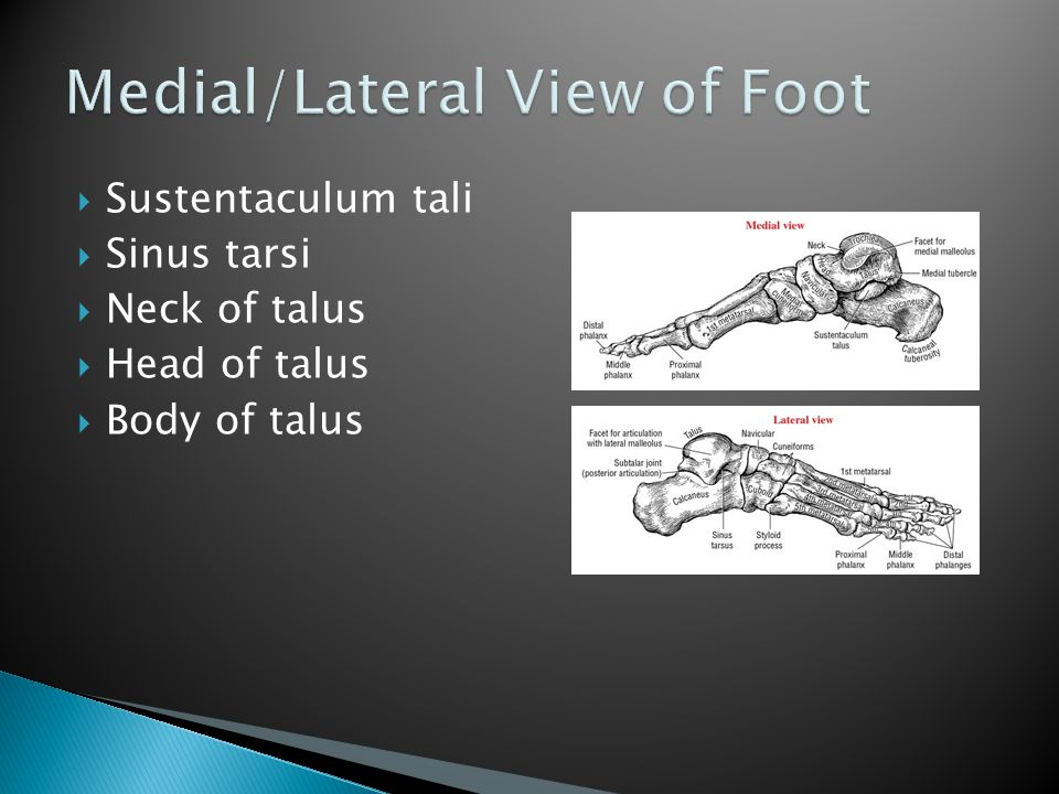 Medial/Lateral View of Foot