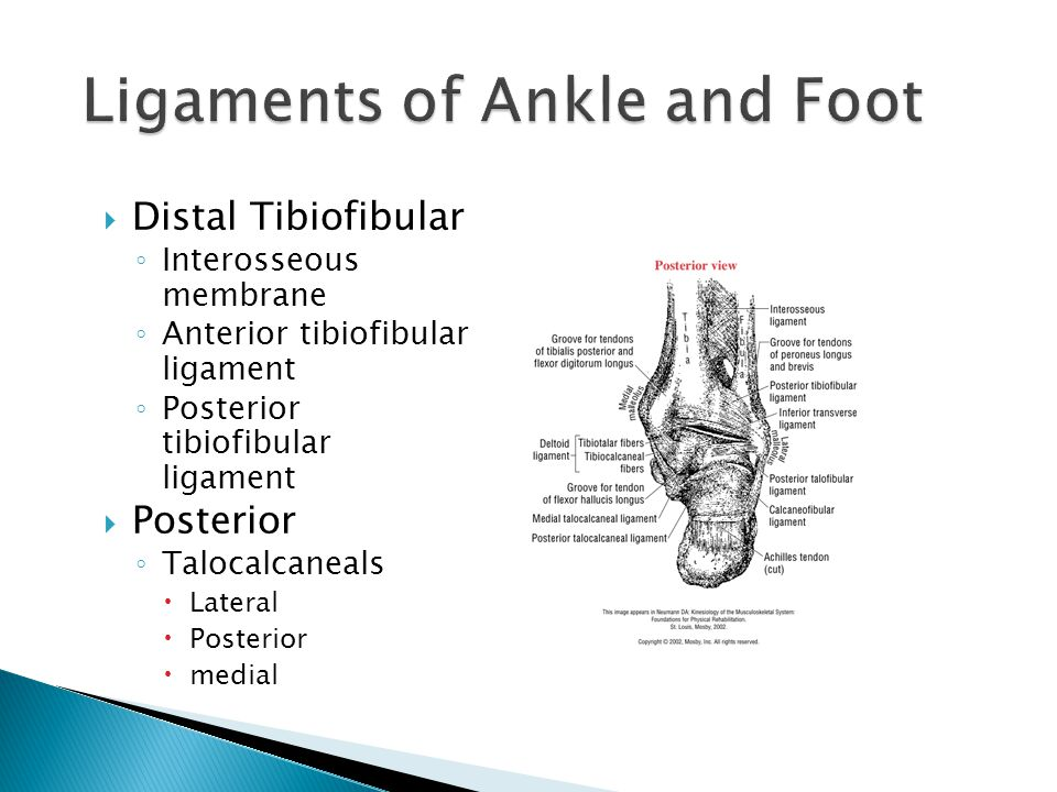 Ligaments of Ankle and Foot