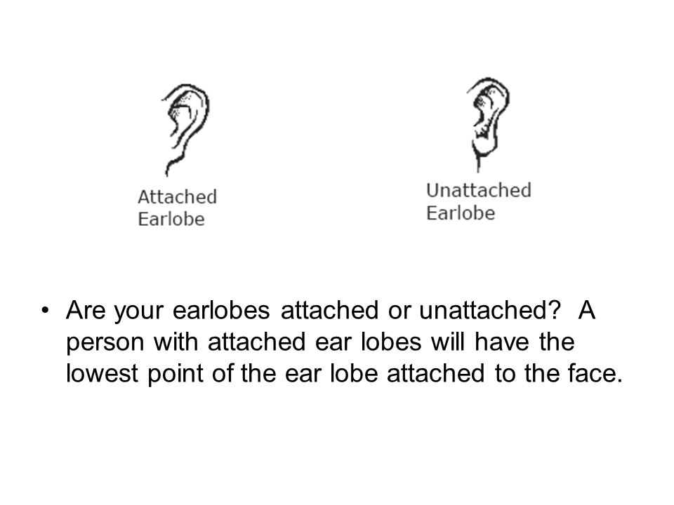 Are your earlobes attached or unattached