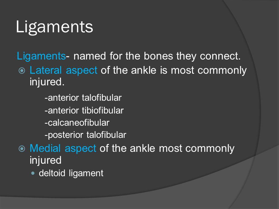 Ligaments -anterior talofibular