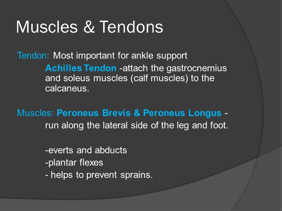 Muscles & Tendons
