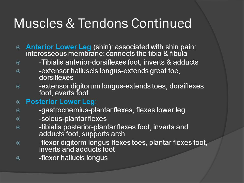 Muscles & Tendons Continued