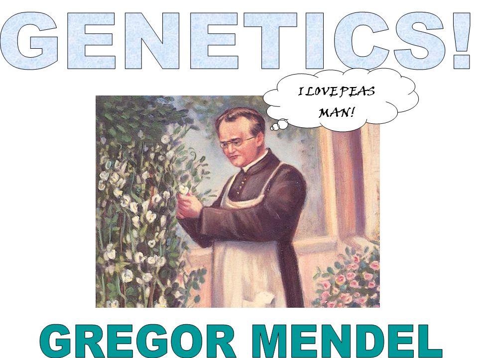 GENETICS! I LOVE PEAS MAN! GREGOR MENDEL