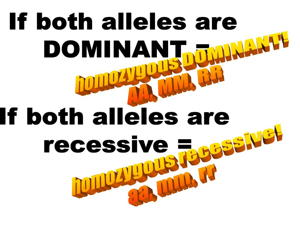 If both alleles are DOMINANT = homozygous DOMINANT! AA, MM, RR. If both alleles are. recessive =