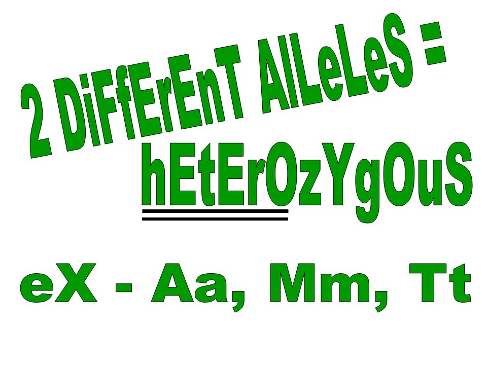 2 DiFfErEnT AlLeLeS = hEtErOzYgOuS eX - Aa, Mm, Tt
