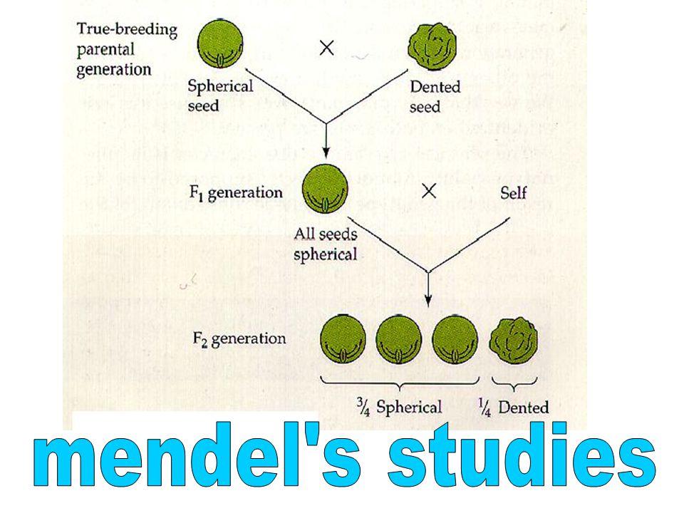 mendel s studies