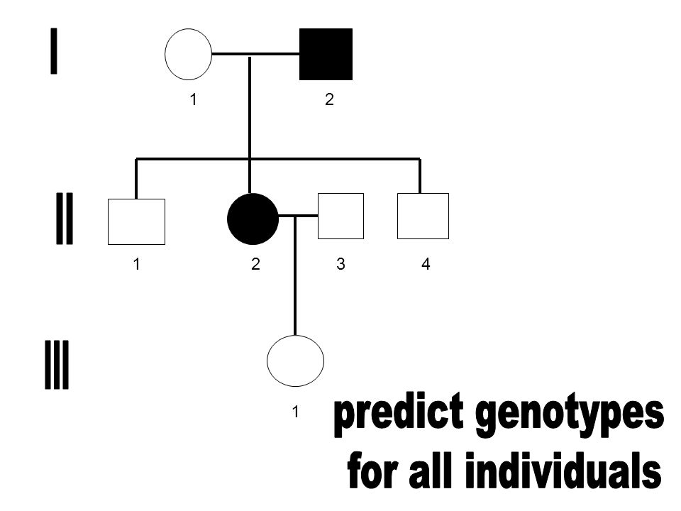 1 2 3 4 I II III predict genotypes for all individuals