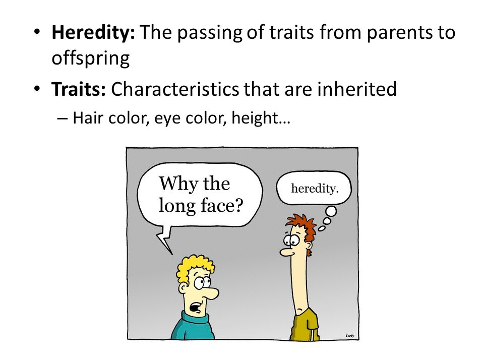 Heredity: The passing of traits from parents to offspring