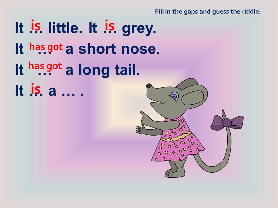 is is is It … little. It … grey. It … a short nose. It … a long tail.