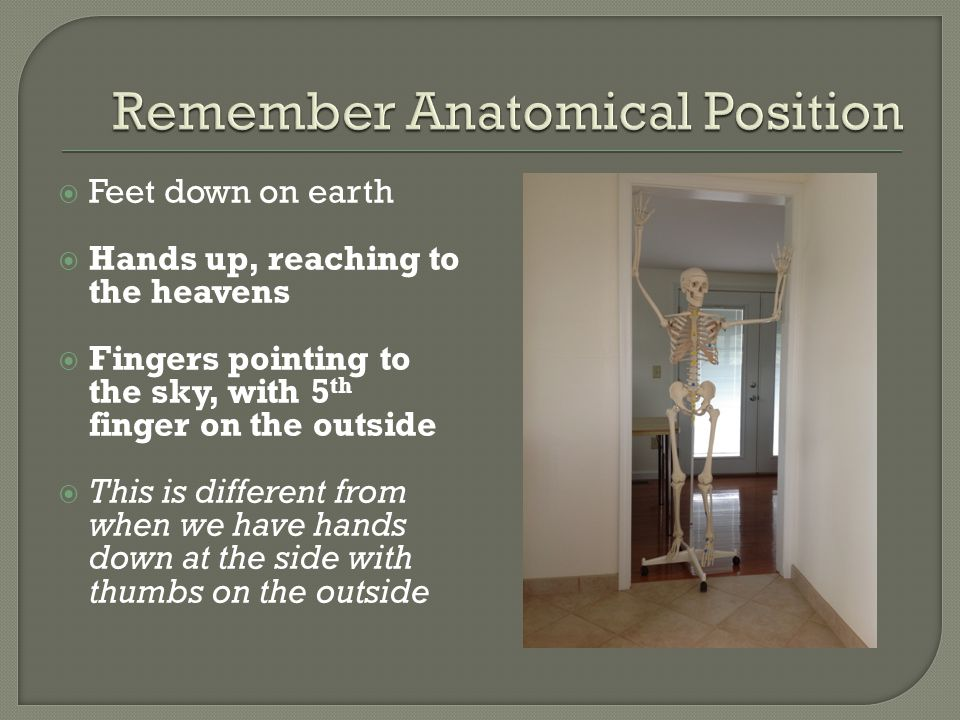 Remember Anatomical Position