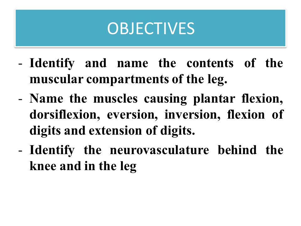 OBJECTIVES Identify and name the contents of the muscular compartments of the leg.