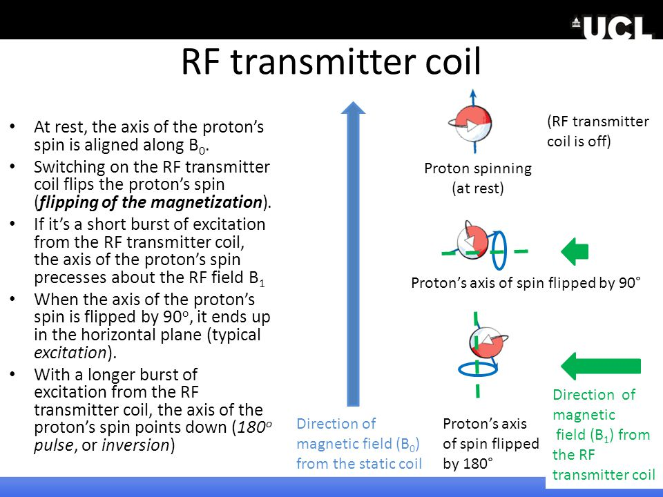 2010 RF transmitter coil. (RF transmitter. coil is off) At rest, the axis of the proton's spin is aligned along B0.