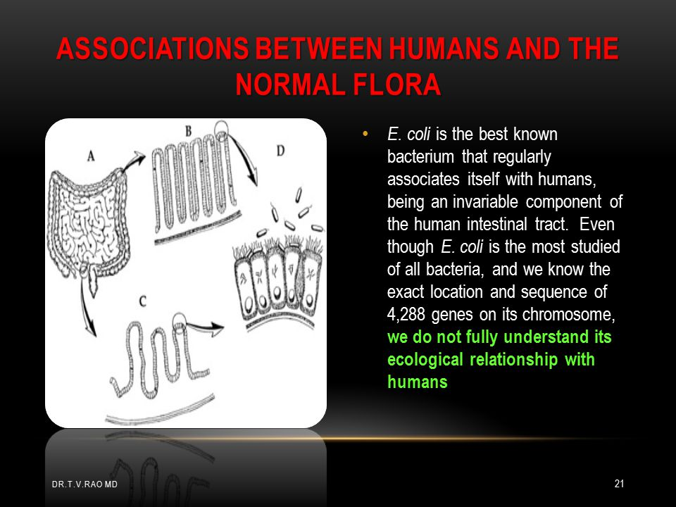 Associations Between Humans and the Normal Flora
