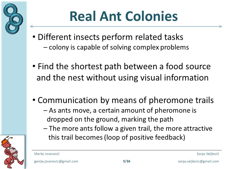 Real Ant Colonies Different insects perform related tasks