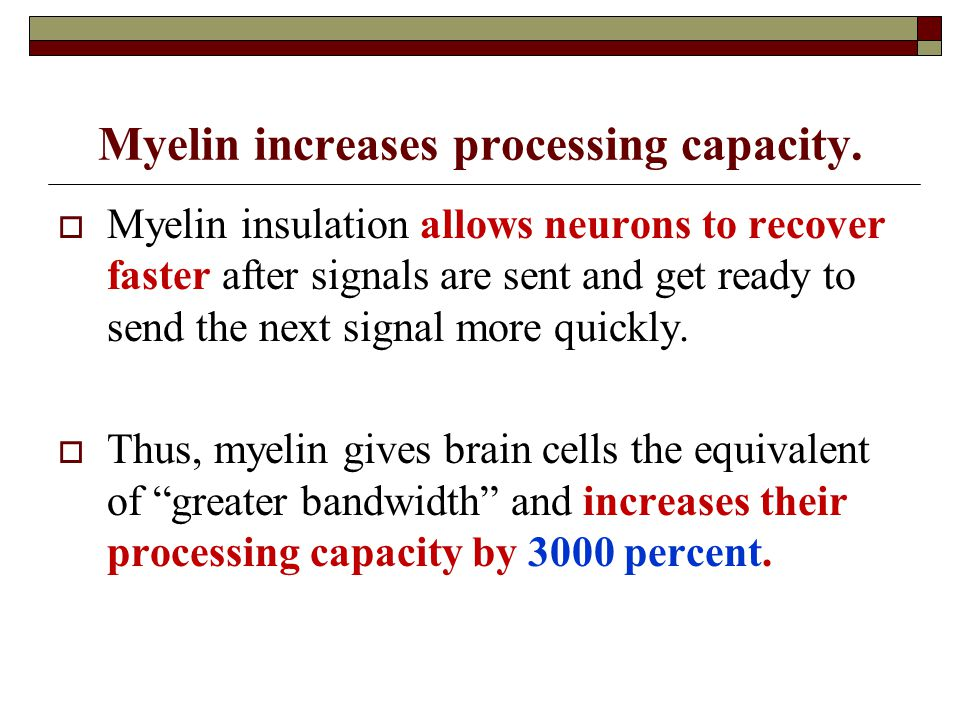 Myelin increases processing capacity.