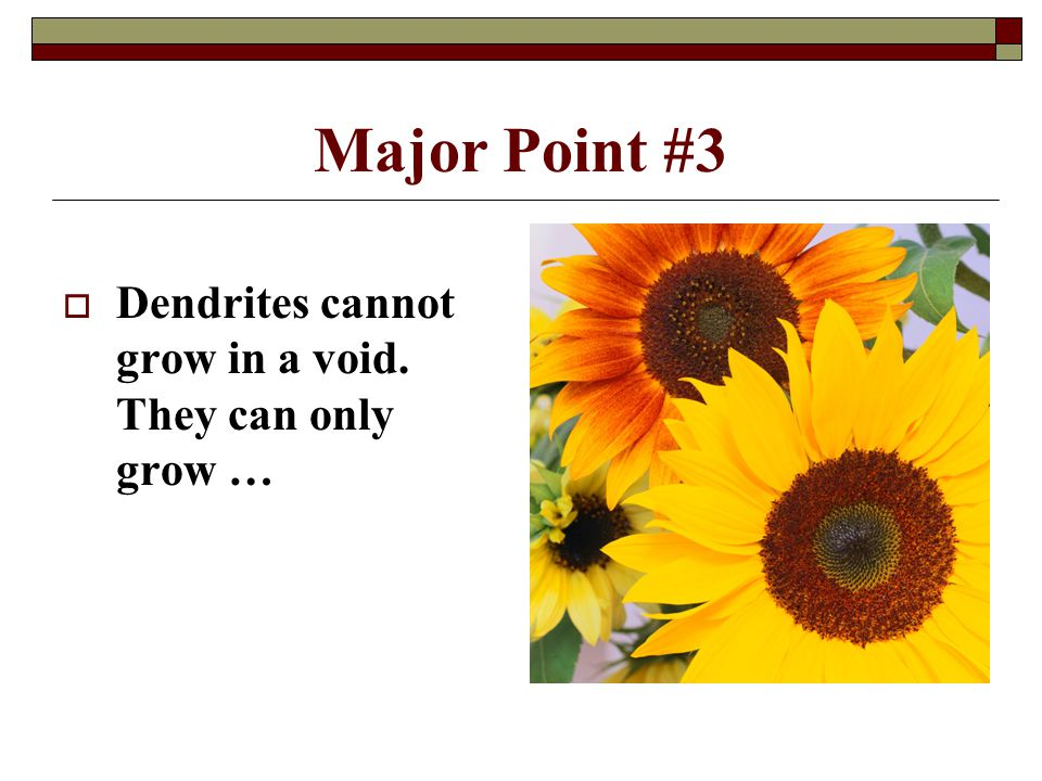 Major Point #3 Dendrites cannot grow in a void. They can only grow …