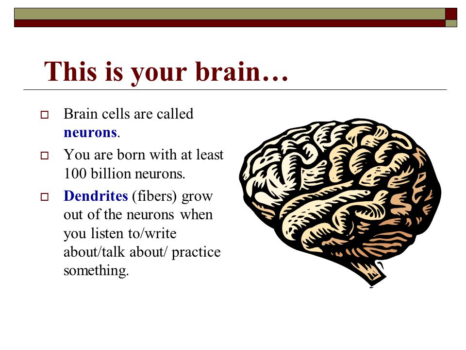 This is your brain… Brain cells are called neurons.