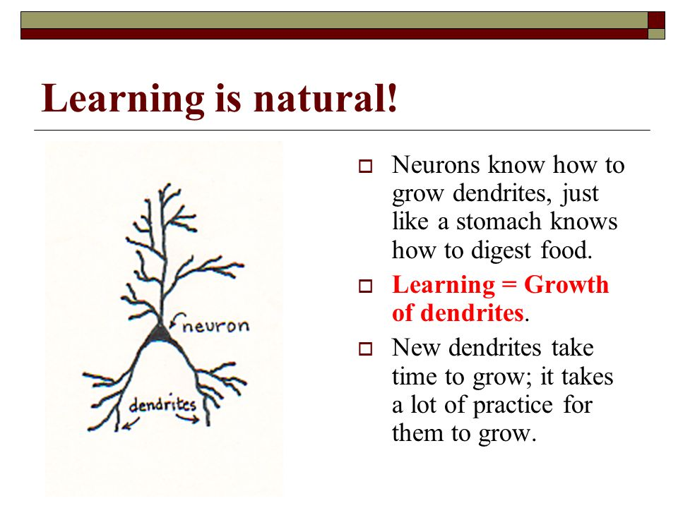 4/15/2017 Learning is natural! Neurons know how to grow dendrites, just like a stomach knows how to digest food.