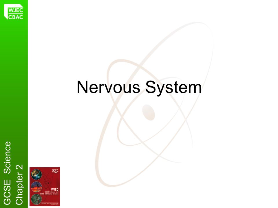 Nervous System GCSE Science Chapter 2