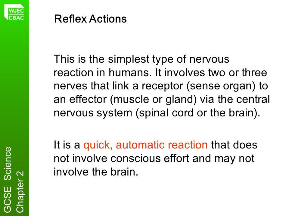 Reflex Actions