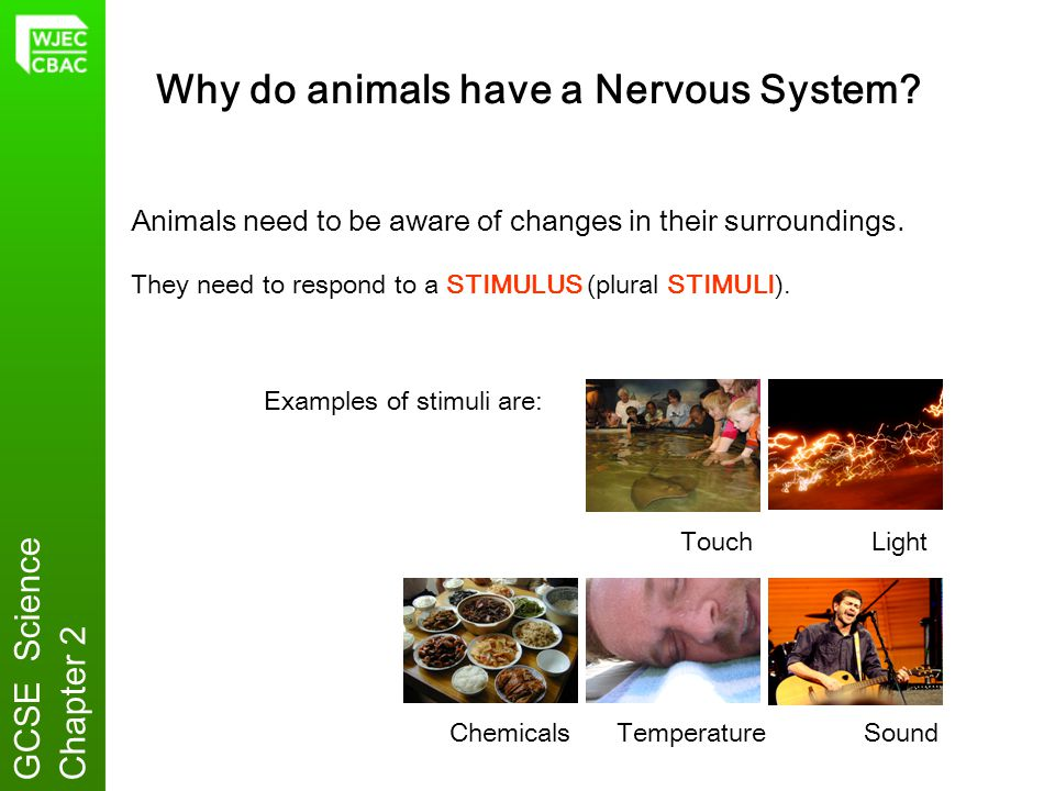 Why do animals have a Nervous System
