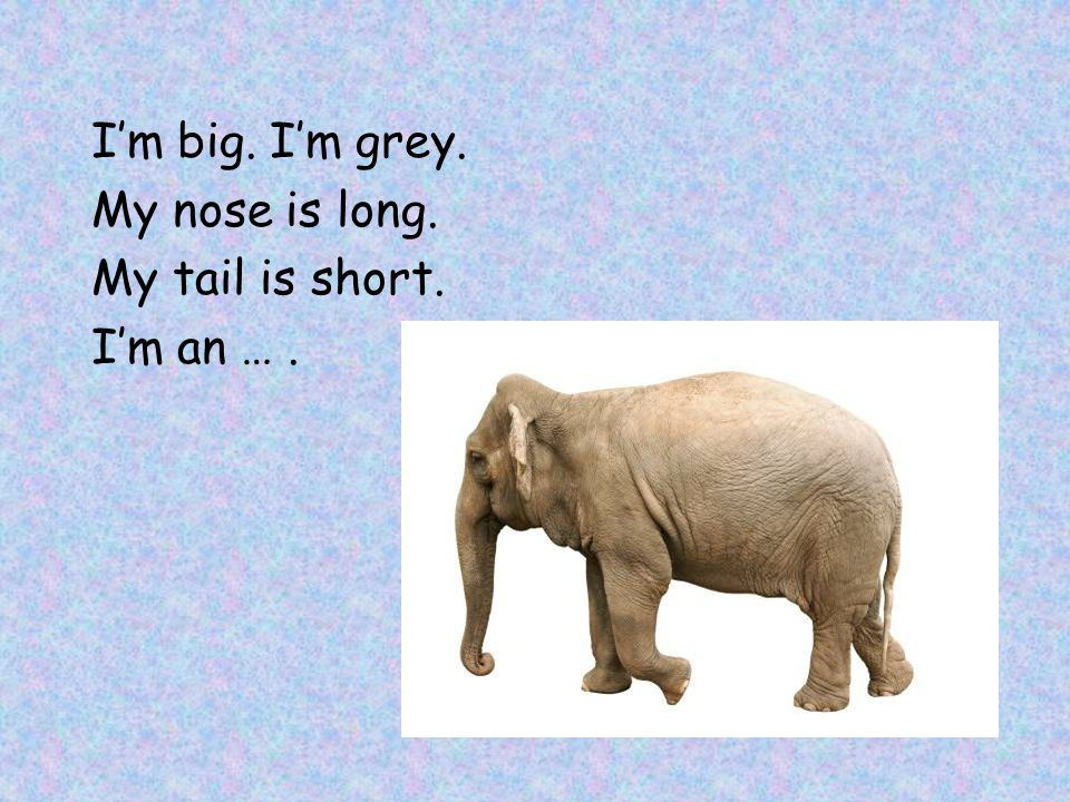 I'm big. I'm grey. My nose is long. My tail is short. I'm an … .