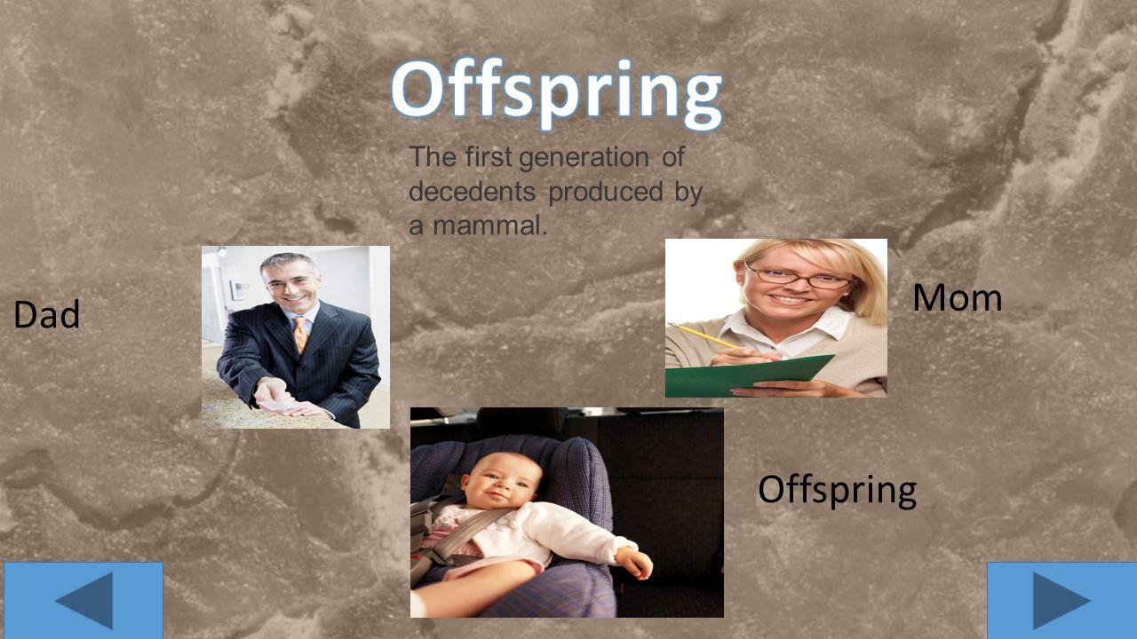 Offspring Mom Dad Offspring