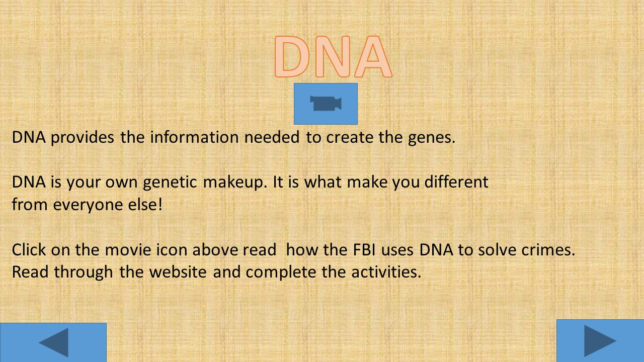 DNA DNA provides the information needed to create the genes.