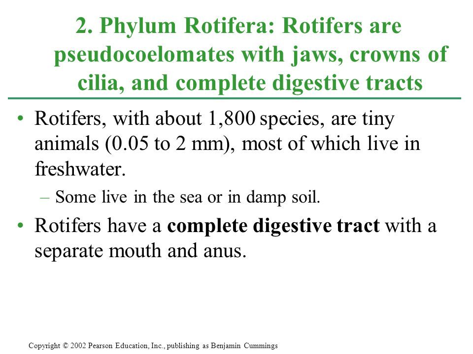 2. Phylum Rotifera: Rotifers are pseudocoelomates with jaws, crowns of cilia, and complete digestive tracts