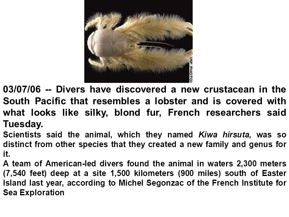 03/07/06 -- Divers have discovered a new crustacean in the South Pacific that resembles a lobster and is covered with what looks like silky, blond fur, French researchers said Tuesday.