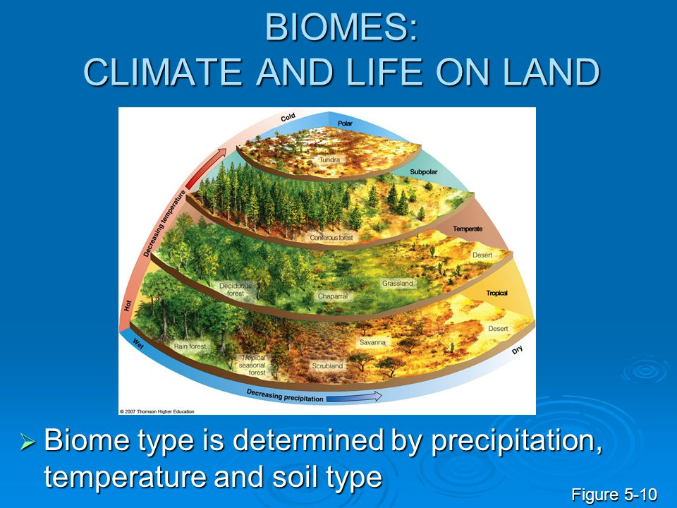 BIOMES: CLIMATE AND LIFE ON LAND