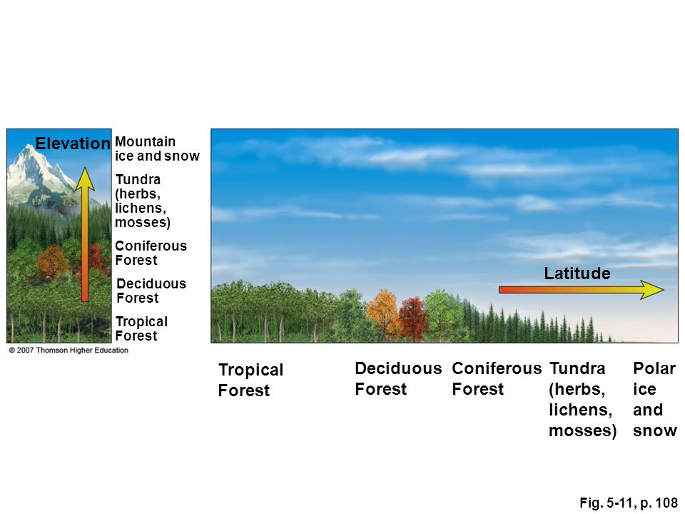 Elevation Latitude Tropical Forest Deciduous Forest Coniferous Forest