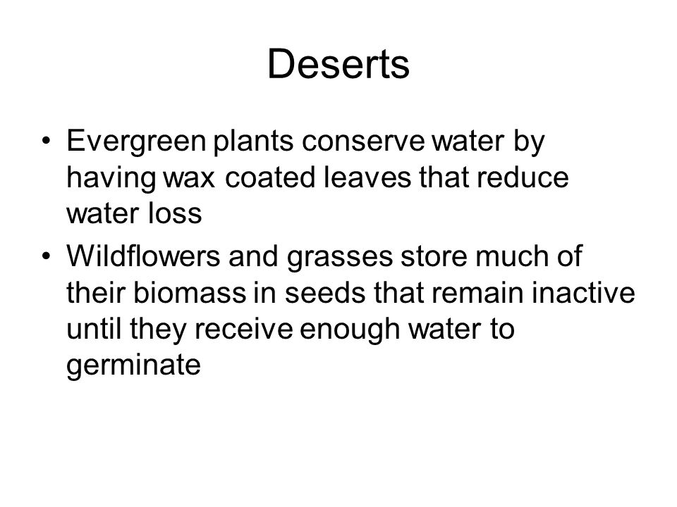 Deserts Evergreen plants conserve water by having wax coated leaves that reduce water loss.