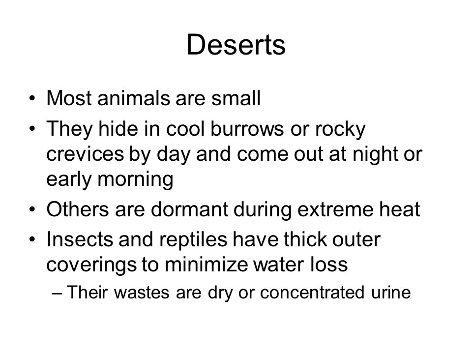 Deserts Most animals are small