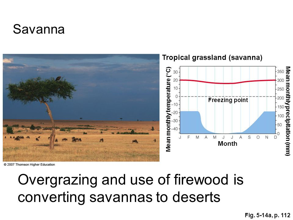 Overgrazing and use of firewood is converting savannas to deserts