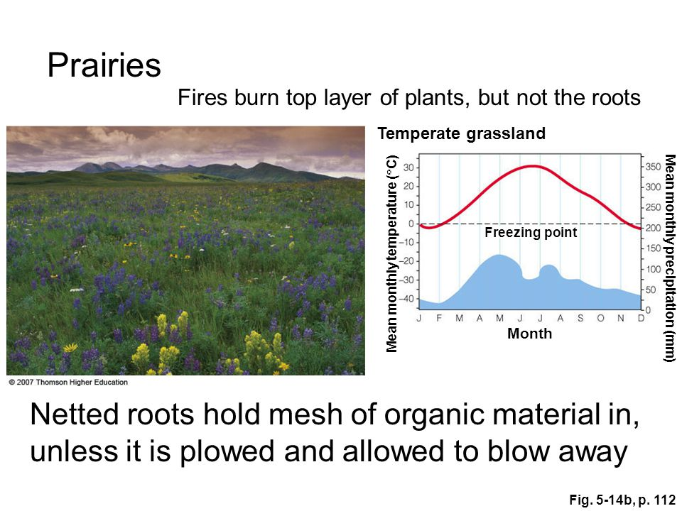 Prairies Fires burn top layer of plants, but not the roots. Temperate grassland. Freezing point. Mean monthly temperature (C)