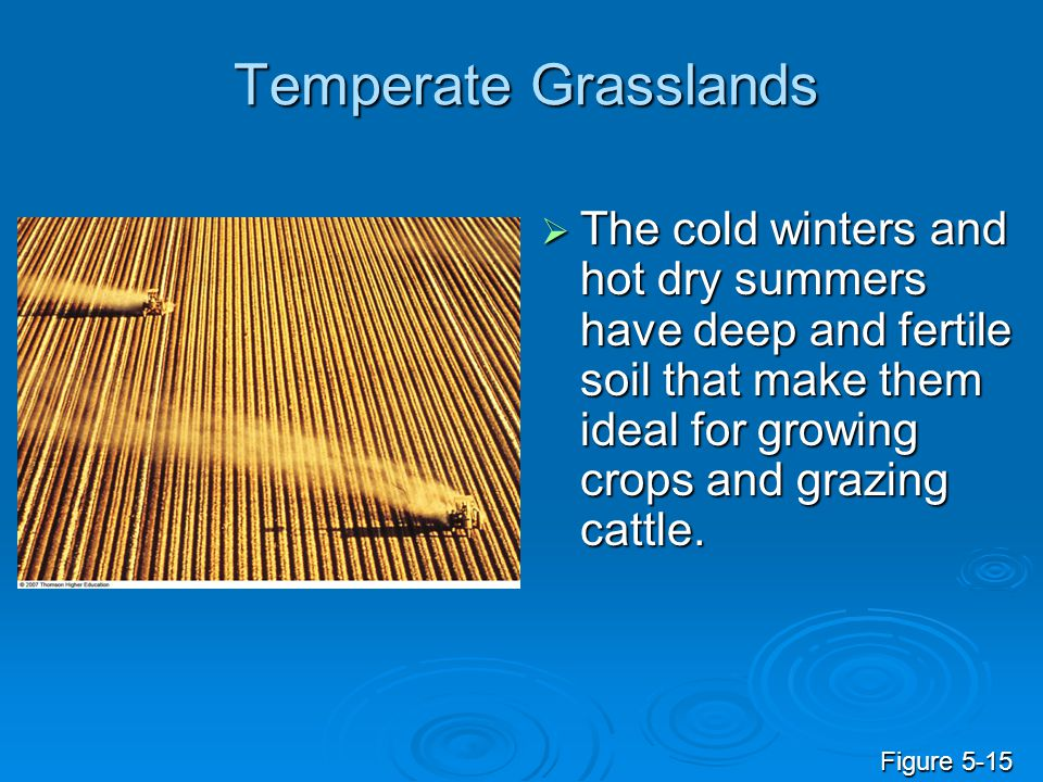 Temperate Grasslands The cold winters and hot dry summers have deep and fertile soil that make them ideal for growing crops and grazing cattle.