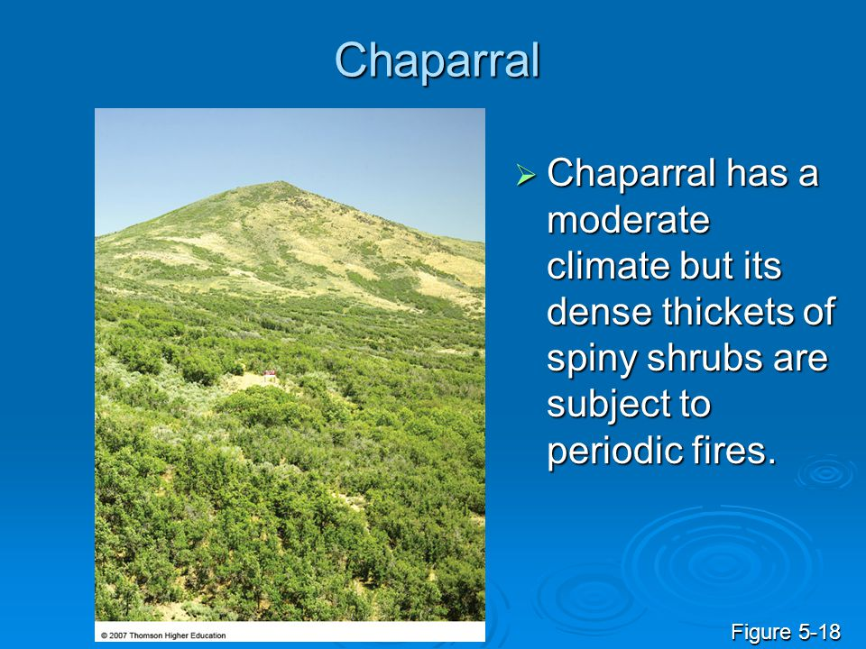 Chaparral Chaparral has a moderate climate but its dense thickets of spiny shrubs are subject to periodic fires.