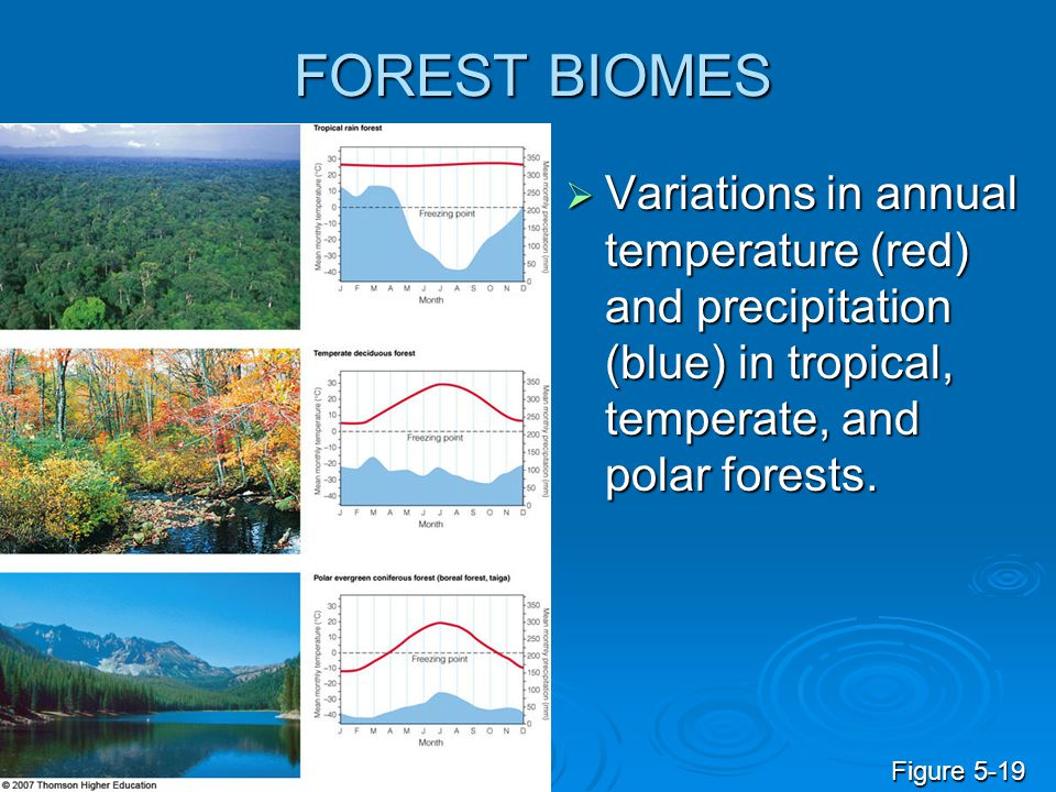 FOREST BIOMES Variations in annual temperature (red) and precipitation (blue) in tropical, temperate, and polar forests.