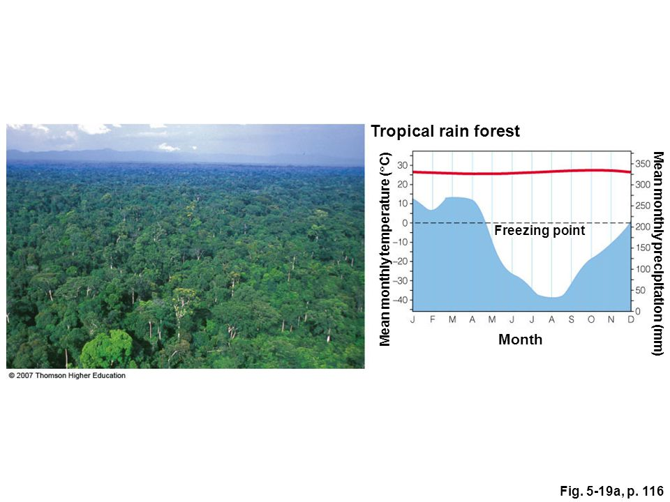 Tropical rain forest Month Mean monthly temperature (C)