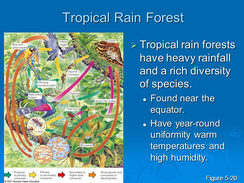 Tropical Rain Forest Tropical rain forests have heavy rainfall and a rich diversity of species. Found near the equator.